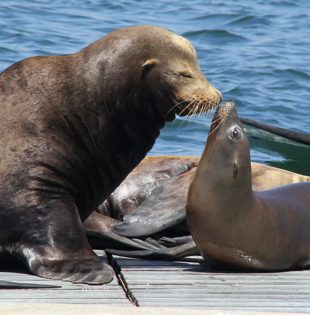 Daddy and Baby Sea Lion a