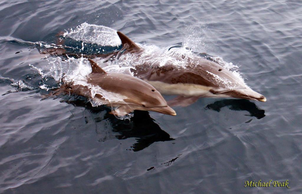 Dolphin Mom 1