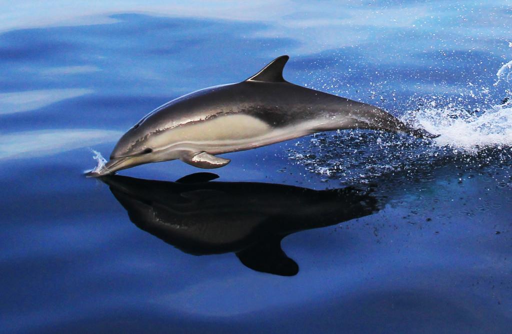 Dolphin Touchdown