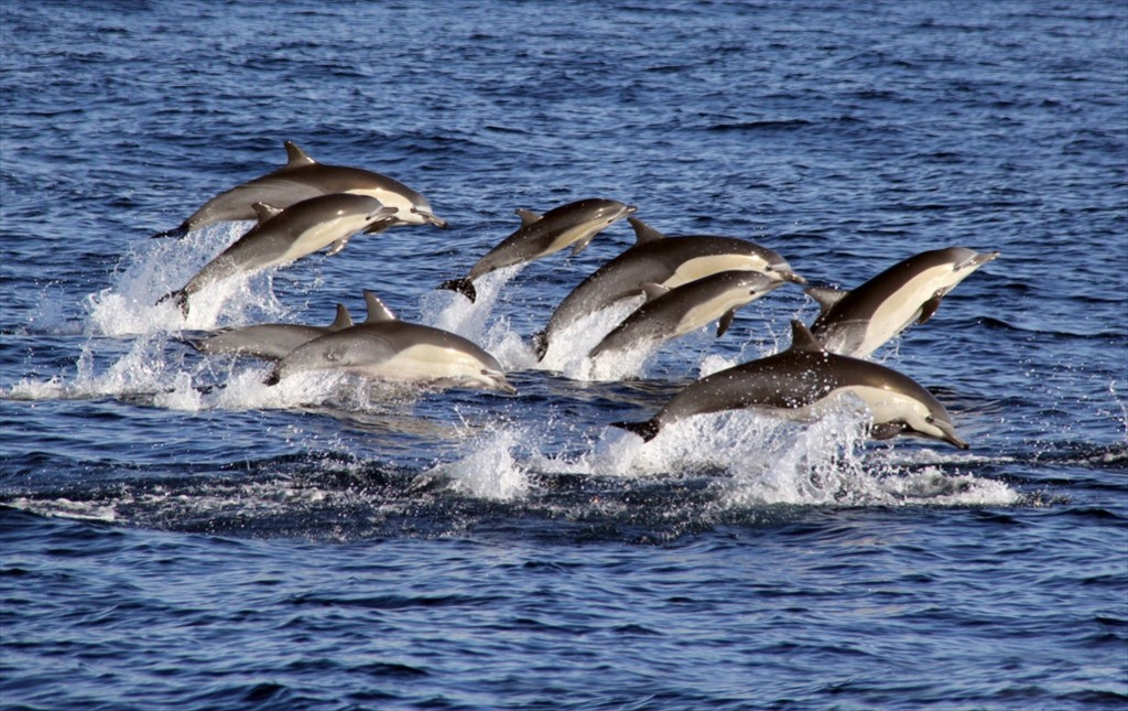 Dolphin Party 2