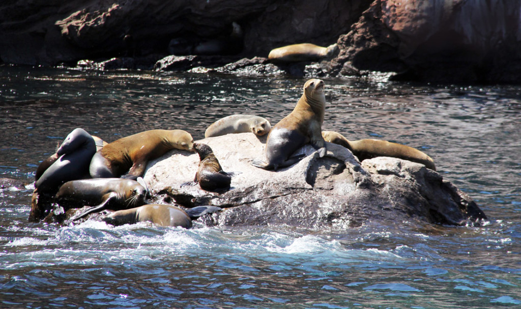 Sea Lion Party 2