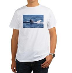 Men's Organic T-Shirts